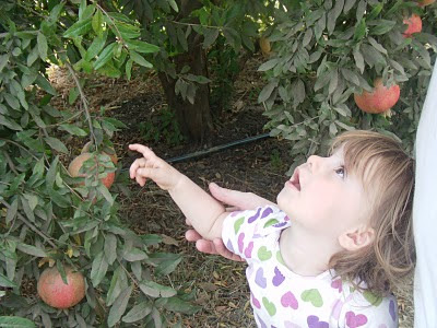 Girl with Capay Valley pomegranates