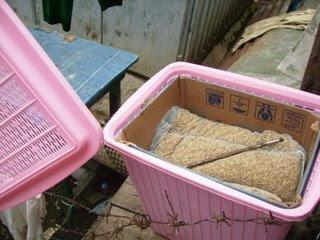 ARTI Biogas Solusi Sampah Rumah Tangga