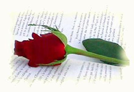 Una rosa, un libro Rosa