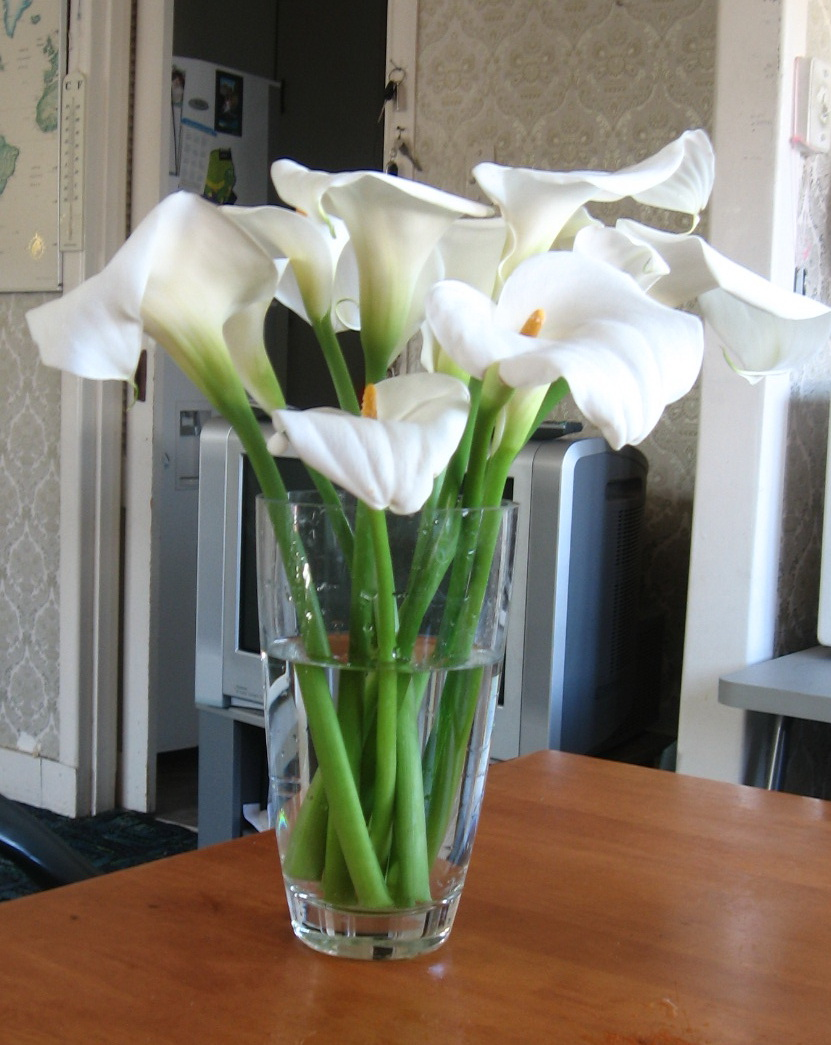 My thoughts stories and articles my world tuesday calla lilies calla lily plants in my garden reviewsmspy