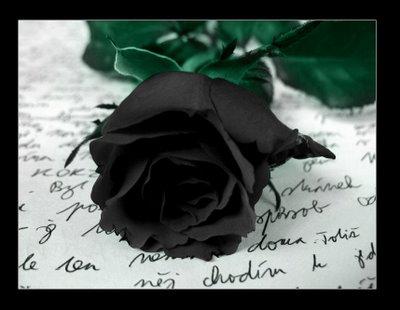 Imagenes De Rosas Con Texto}