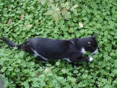 Tux in clover