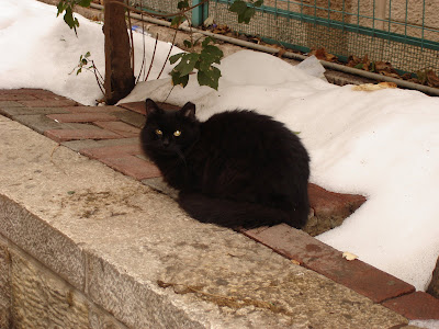 Fluffy black cat against white snow