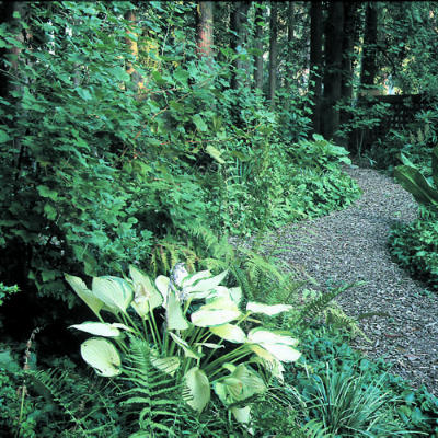 Lowestoft landscape lass allegorical garden research images for Woodland garden designs ideas