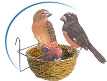 [bird.jpe]
