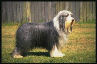 dogknot