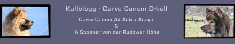 Carve Canem D-kull