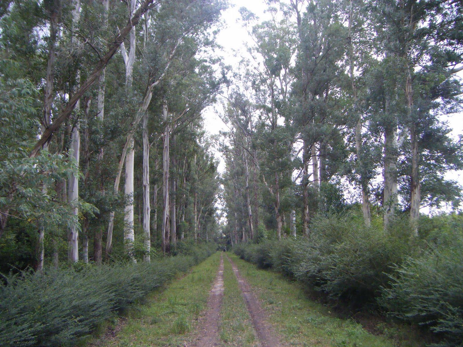 A su salud plan forestal del bicentenario monte del for Vivero el ceibo