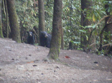 Bears on a Trail