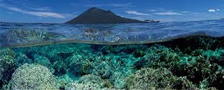 hamparan karang Bunaken
