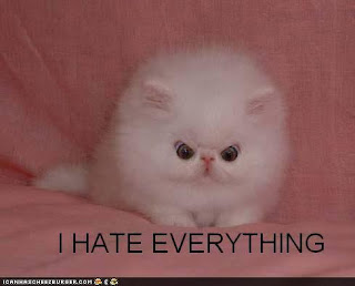 I feel your pain, kitty!!