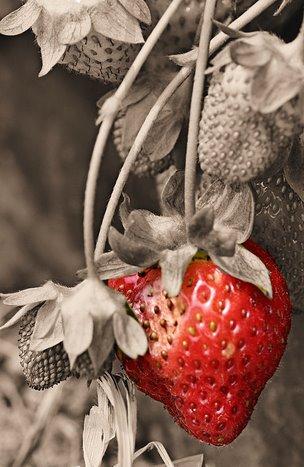 Cinta seperti Strawberry.....indah dipandang mata, manis & masam di dalam mulut