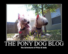 Follow the Adventures of Two Chinese Crested Dogs