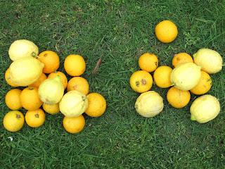 Test with Skewer: Caramel oranges and saffron – pistachio ice-cream.