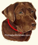 Pet Portraits by Cherie
