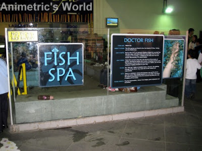 Fish Spa at Manila Ocean Park