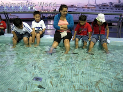 Manila Ocean Park Entrance Fee http://animetric.blogspot.com/2009/08/fish-spa-at-manila-ocean-park.html
