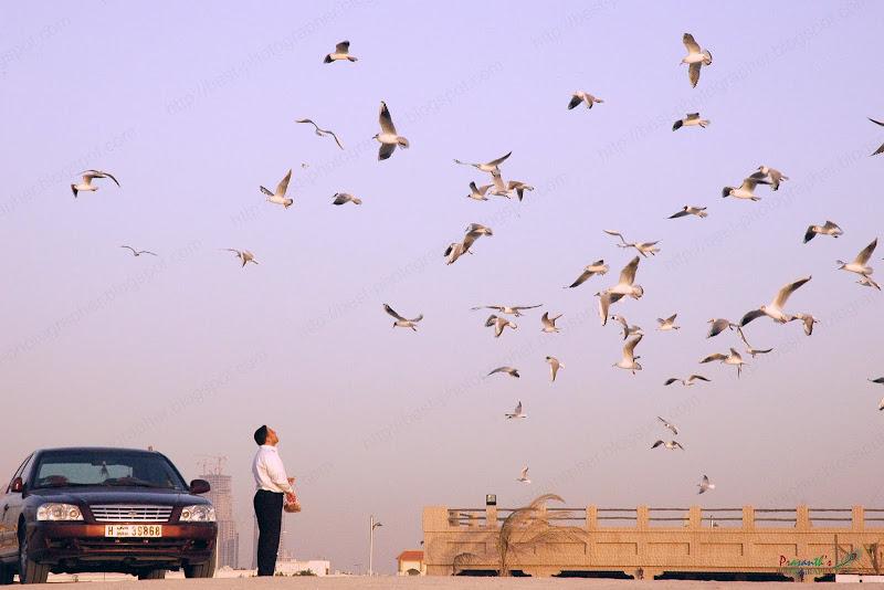 birds at dubai beach