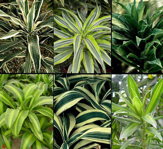 Las plantas de interior plantas flores y jardin for Plantas verdes de interior