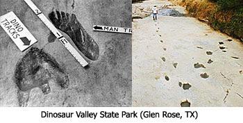 Dino With Human Tracks