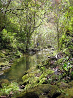 Small creek on Maui Hawaii
