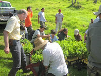 Volunteer tourists help restore native Hawaiian species to Mount Haleakala, Maui, Hawaii