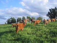 New York grass fed beef