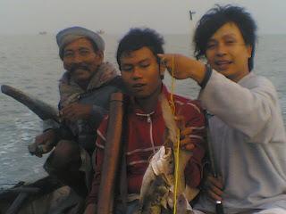 hiu karang