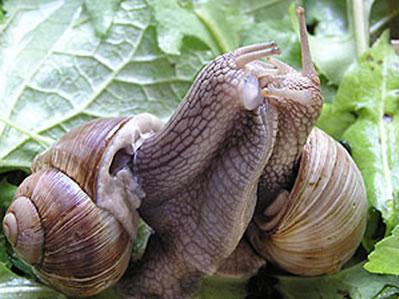 [Image: snails3.jpg]