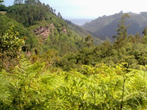 Los bosques de Poreño