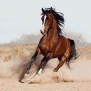 """Предпросмотр схемы вышивки  """"Серия лошади """".  Серия лошади, животные, лошади, фентези."""