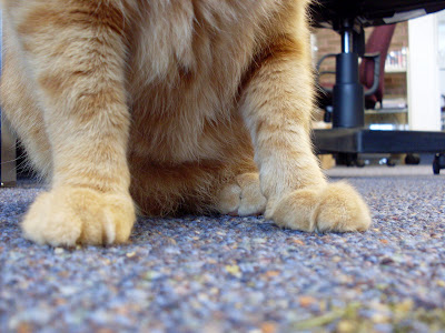 Manly paws and 'nip.