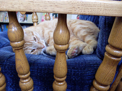 I am the sorriest about being a lazy blogging cat.