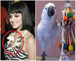 Fashion Crime - Katy Perry