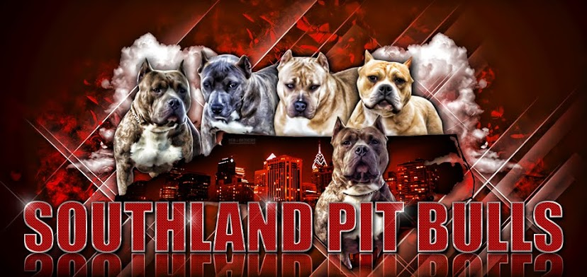 Southland Pit Bulls
