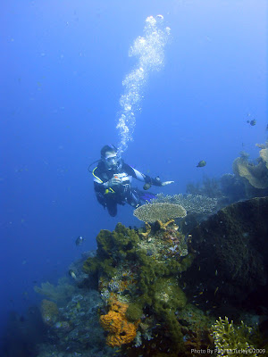Peter the Diver, photographing reefscape, Close Encounters, Pemuteran, NW Bali, Sea Rovers Dive Centre