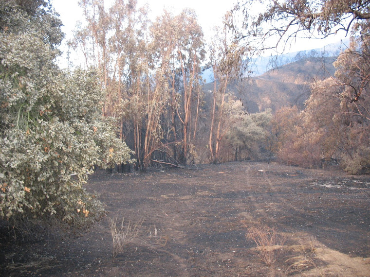Triangle Complex Fire: Devastation on the Brea Side of Carbon Canyon