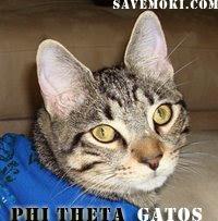 Join Phi Theta Gatos