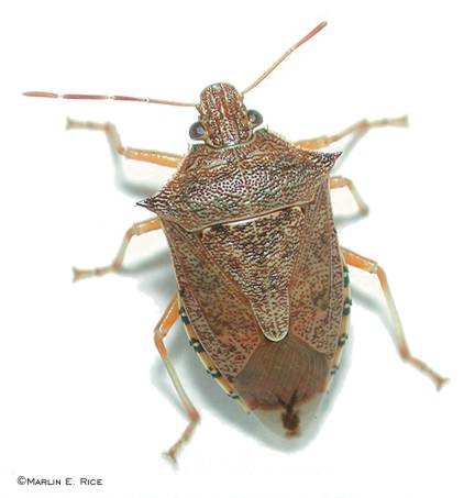 winterberry farm primitives garden blog no stink bugs around here. Black Bedroom Furniture Sets. Home Design Ideas