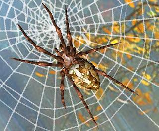 Scorpions des ardoises l 39 araign e tisse sa toile - Toile d araignee en papier ...