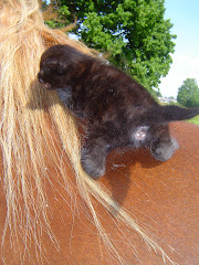Un chat sur le dos de Quidam
