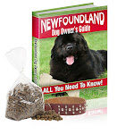 New Foundland dog care
