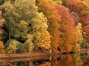 El otoño es un andante melancólico y gracioso que prepara admirablemente el . los arboles en otono