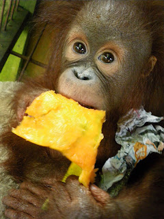 Sindi enjoying a papaya fruit