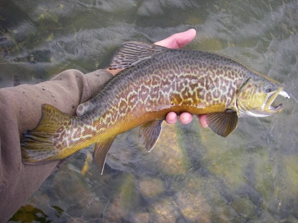 Utah water log currant creek reservoir share the knownledge for Utah fish stocking report