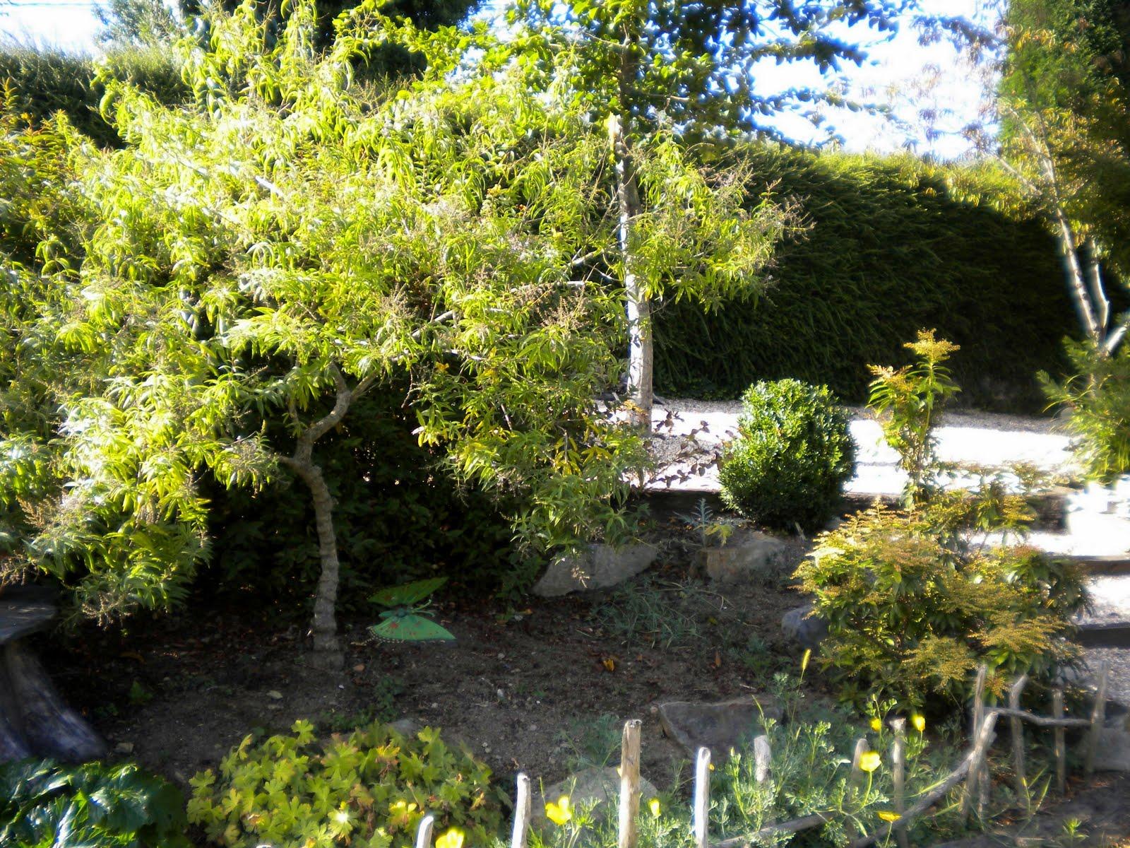 El jard n de margarita hierba luisa for Hierba jardin
