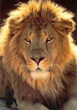 Educandário Leão de Judá