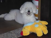 Vote no Iori e ajudem esse cãozinho fofo a ser a capa do calendário!