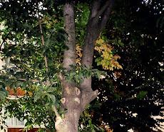 Castan la Cugir, septembrie 2008