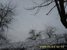 un strat de zăpadă